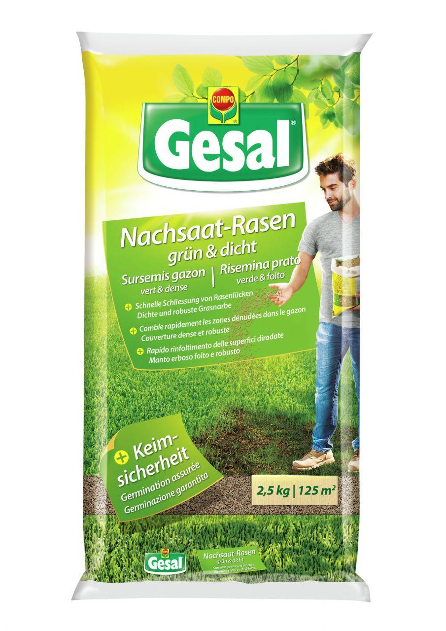 Gesal Nachsaat-Rasen grün und dicht